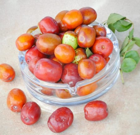 Jujube Seeds Toxiburn